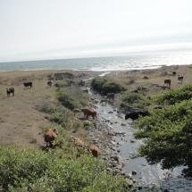 Epic Lost Coast